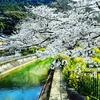 京都ぶらり 琵琶湖疎水 山科疎水 京都疎水