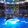 水族館行くならここ!!品川アクアパークの季節限定のイルカショーが凄い!