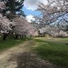 東北は青森の旅② -桜ジャパン、豊盃と田酒を求めて-