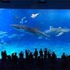 GW初日は美ら海水族館に行ったった。