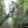 「支障木」の問題