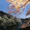 千鳥ヶ淵の桜とごはん