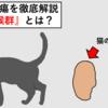 【原発性アルドステロン症(Conn症候群)】猫の副腎腫瘍と言えばコレ