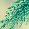 【図鑑が好き!】おすすめの図鑑10点(植物・菌類編)