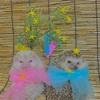 我が家の織姫と彦星