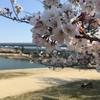 今日からテレワーク 武庫川で息抜きジョグ