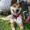 犬の譲渡会 in 葉山 ②