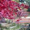 【京都紅葉🍁2020大原野神社】🍁もみじの参道と神鹿像🦌に癒される神社⛩ハードな京都観光編🚗