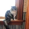 最後の晩餐は何にしよう:窓際族の猫