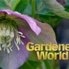Gardeners World 2019 (第1回)を見て