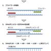 第30回20 核酸の問題、PCR法のくわしい解説