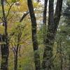 霜降の奥物部遊山 樹々の色