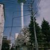 給水塔と桜