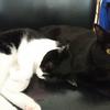 今日の黒猫モモ&白黒猫ナナの動画ー770