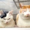 ひな祭りの雛ネコと、鏡餅で作るひなあられ。