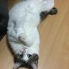 【猫ブログ】ちびちゃん 変なかっこ!