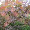 初夏の「まつこの庭」(2)