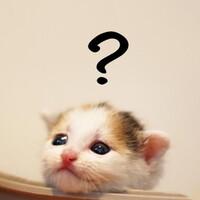 ネコにも「死」の概念はあるのだろうか?