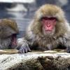 高崎山での猿のお話 #猿 #大分 #修学旅行 #高崎山
