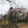 【花より●●】今年の花見は、さくらの名所100選「清水公園」(千葉県野田市)