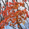 紅葉を楽しみに石割山へ