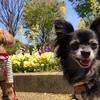東京なのに広大♪愛犬とゆったりお散歩が楽しめる公園☆面積が広い順TOP10