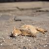 春の太陽を浴びるネコさんを撮る