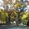 紅葉の駒沢公園