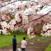 [名桜探訪]★旧南部藩陣屋跡(名桜探訪⑮)