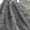 [家庭菜園2020]ようやく苗の購入と畝作り