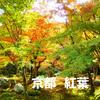 京都の紅葉を楽しむコツは?実際に歩いたおすすめ観光コースを6つ紹介