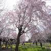 立川昭和記念公園のお花見 園内の様子と設備