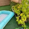 【家庭菜園】ぼちぼち育ちました