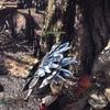 大盾をつくった男09 オタカラ攻略 大蟻塚の荒地編 モンスターハンターワールド:アイスボーン