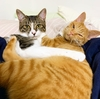 猫2匹が家族になって、人間の子どもをワンオペで育てている人を尊敬した話