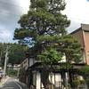 岐阜県観光大使のつれづれ~高山に残る3本のクロマツ~