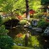 【新緑】春の京都御所と京都御苑【霧島ツツジ】