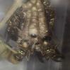 アシナガバチのワーカー5匹目羽化
