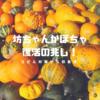 うどんこ病に見舞われた「坊ちゃんかぼちゃ」が復活の兆し!