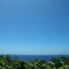 夏だ!沖縄だ!!絶対に食べるべきローカルフードはこれだ!!!
