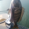 清水 三保 紀州釣り ひさしぶりに楽しい考える釣り