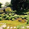 庭師とめぐる、庭めぐり~半夏生の咲く庭・両足院~
