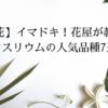 【切花】イマドキ!花屋が教えるアンスリウムの人気品種7選!