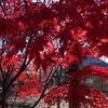 【アラ還さんぽ】間違いない!今年一番の紅葉は間違いなく九品仏。