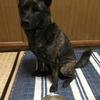 甲斐犬サンへのプレゼント♬ホレッ (ノ ´▽`*)ノ ⌒  Σ(OдO;)