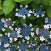 2018年6月30日(土)は【梅雨時の花ピリカ】(オンラインイベント)