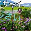 4K DJI Japanドローン空撮『アジサイ祭り』