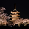 世界文化遺産「東寺」夜桜ライトアップ