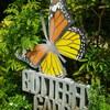 Butterfly Garden@Singapore