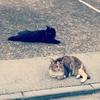 猫まみれの夏